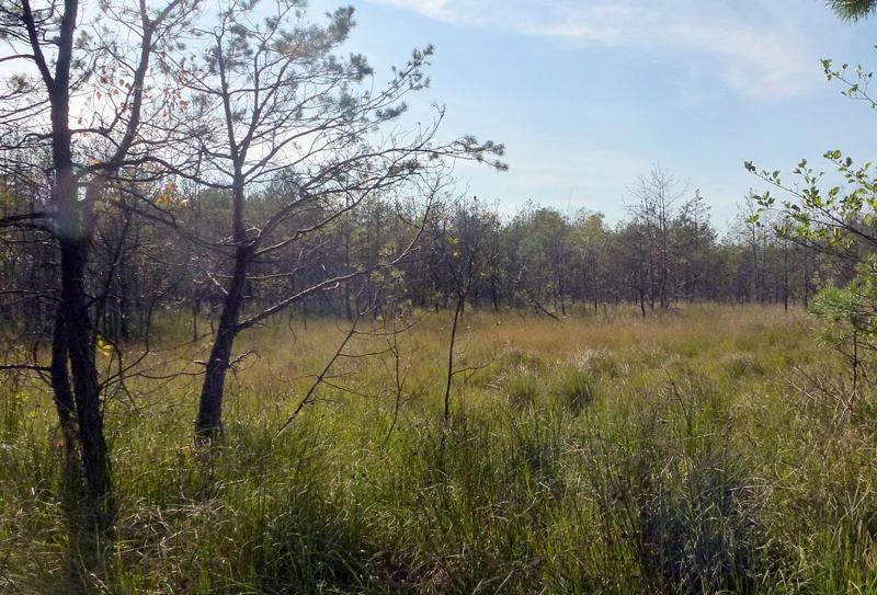 Rezerwat Źródła Tanwi, Południoworoztoczański Park Krajobrazowy
